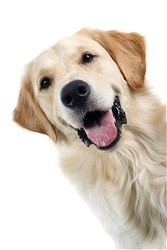 Dallas Veterinary | Dallas Vaccinations - Dogs | NC | Crossroads Animal Hospital |